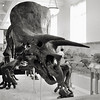 Museum of Natural History<br /> NYC