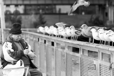 Birdman of Lower Manhattan