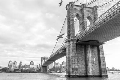 Brooklyn Bridge and Seagulls