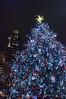 Tree, Bryant Park
