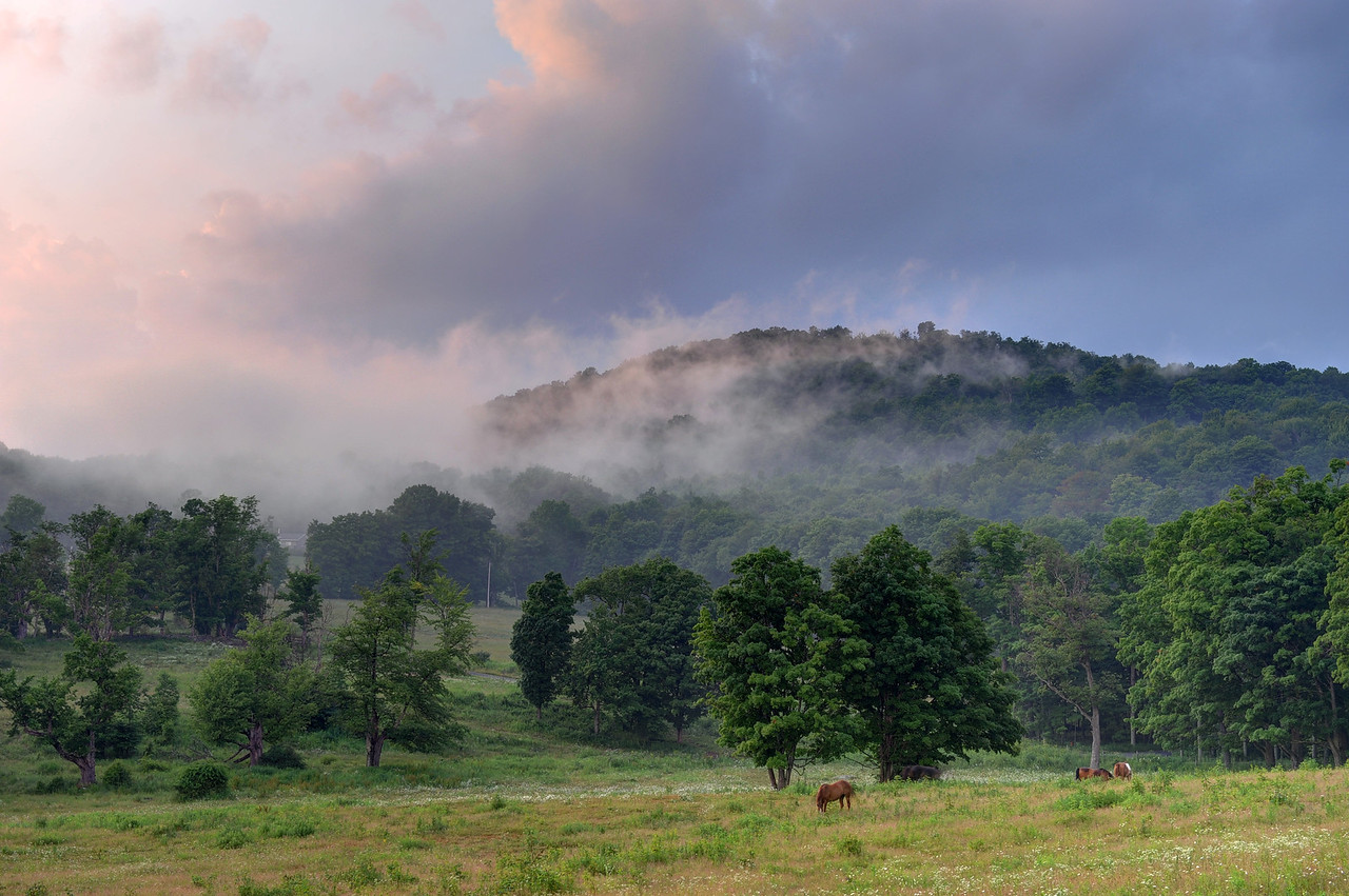Ponies and mist, Margaretville Mountain