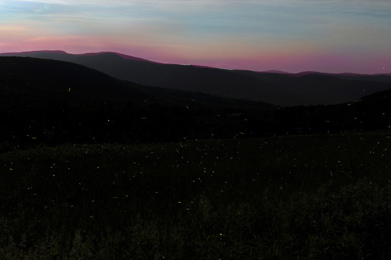 Fireflies at dusk, Margaretville NY