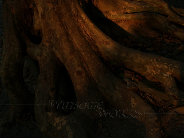 Tree roots by Falls Creek