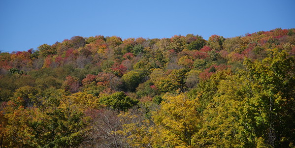 NY Fall Color