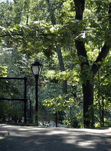 The Ramble, Central Park - September, 2010