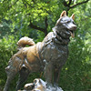 Statue of Balto in New York Central Park<br /> <br /> Balto was a Husky who led the final leg of the 1925 serum run to Nome, in which diphtheria antitoxin was transported to Nome to combat the outbreak of the disease. The statue, sculpted by Frederick Roth, was erected in Central Park on December 17, 1925. Balto was made into amovie in 1995.