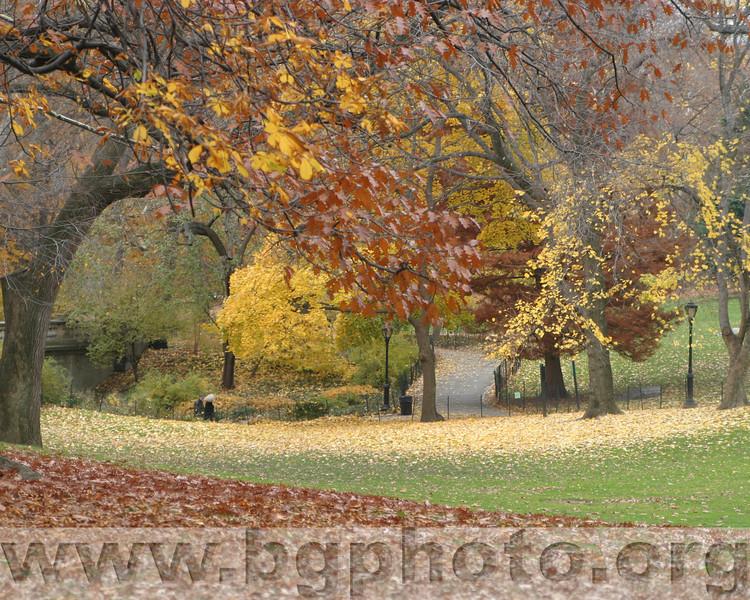 Central Park 008