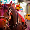 This guy had the most sincere eyes…I missed the focus point by just a bit but I still like the picture. <br /> Horse