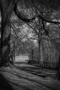 Prospect Park Canopy