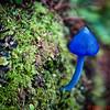Rain Forest Walk - Blue Mushroom