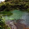 Thermal Springs near Rotorua