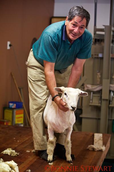 Sheared Lamb