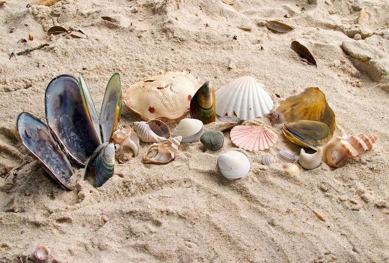 Shells collected on Otama Beach.