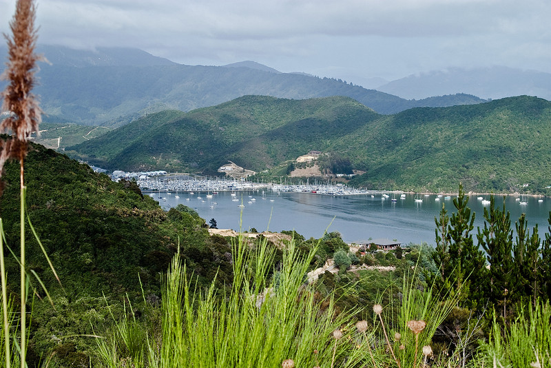 Outer regions of Picton harbor, daytime, as seen from walk above Karaka Point Lodge.