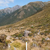 On one of the nature trails near Arthur's Pass.