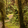 The cool rain forests come down all the way to the coast in this portion of the South Island.  This is a nature trail at Lake Kaniece park.