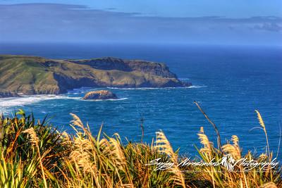 Allan's Beach, Otago Peninsula, Dunedin, New Zealand 2005