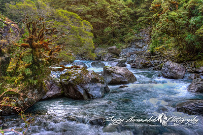 Hollyford River, on the way to Milford Sound, New Zealand, 2005