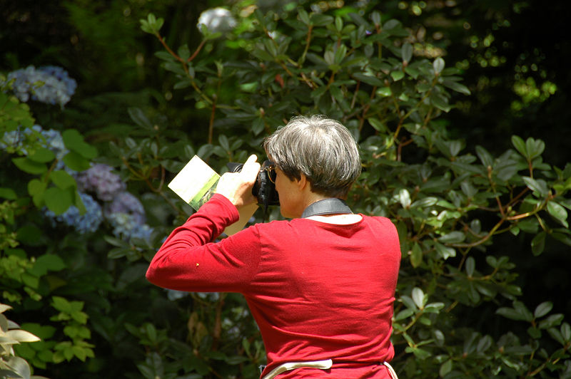 Beth photographing hydrangeas.