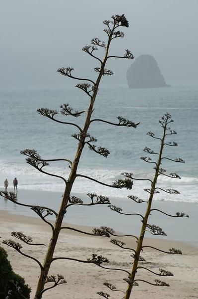 Beach Coromandel Peninsula