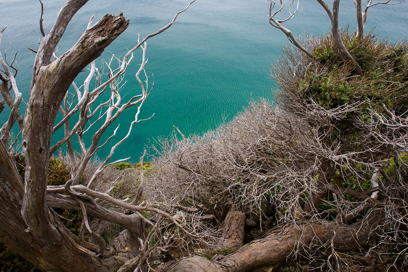 I am fascinated by the patterns formed by sea-side trees. My fellow travelers were worried as I climbed down the cliff and perched to get this shot, trying desperately to keep my shoes out of the frame.
