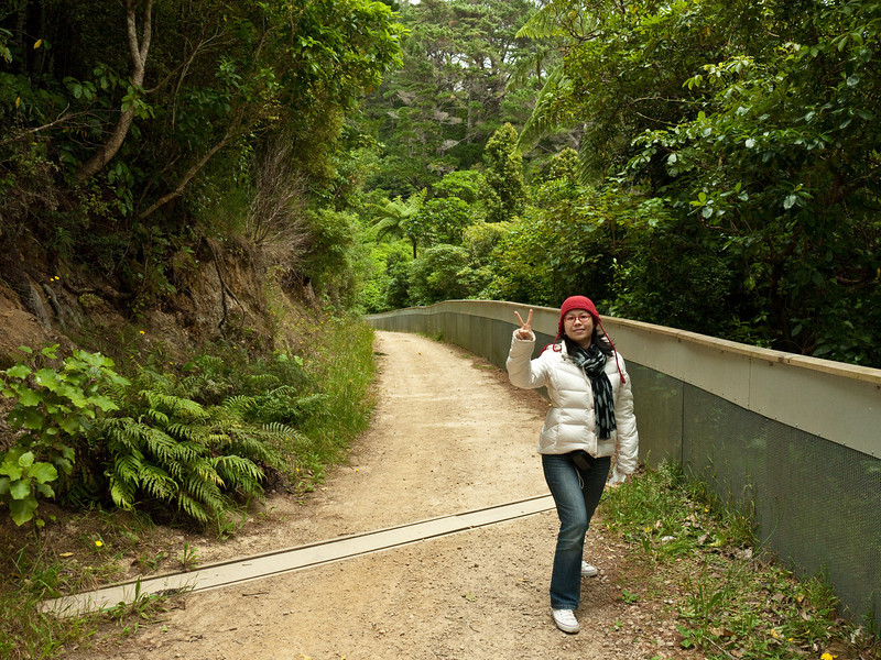 Looking for tuataras in the Karori Wildlife Sanctuary's tuatara area