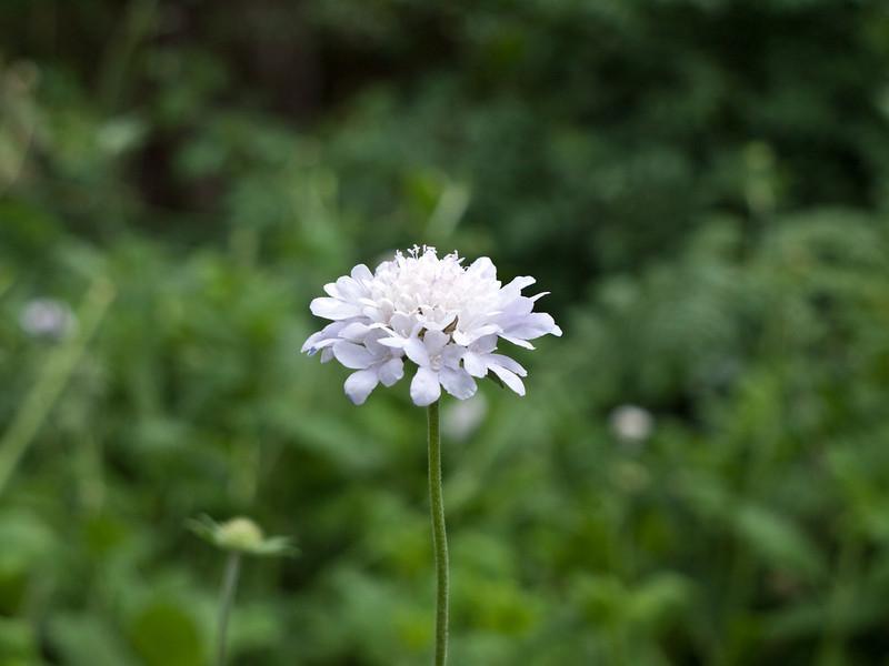 Botanic Gardens flower
