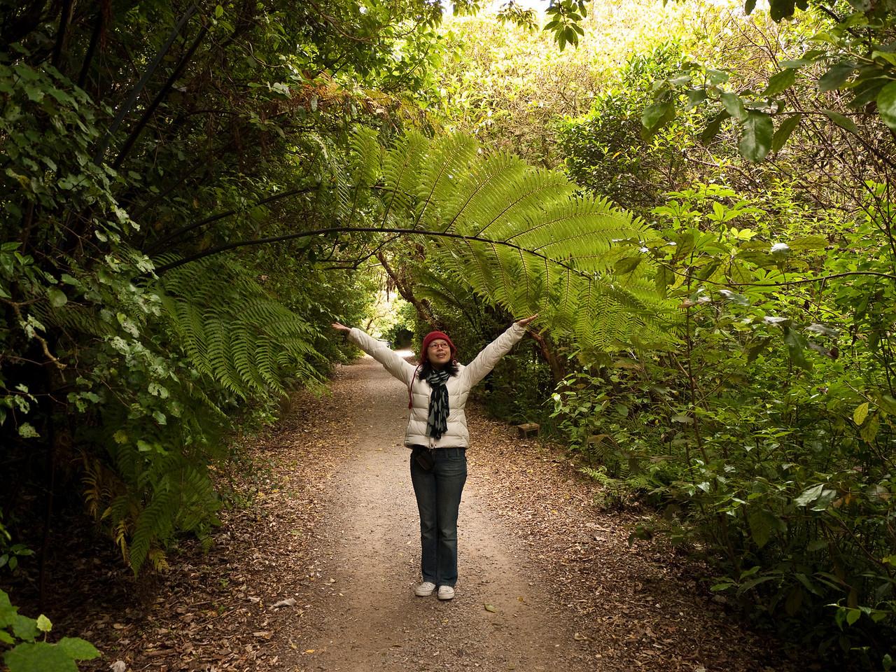 Giant fern leaf in Karori Wildlife Sanctuary