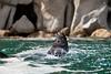 Bathing Seal