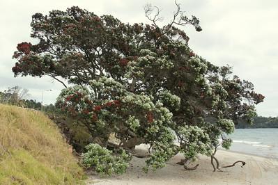 Beach Tree