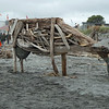 Driftwood sculptures at Hokitika