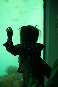 Malia watching the fish in the underwater observatory at Milford Sound.