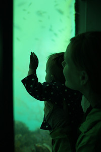 Malia & Aunika watching the fish in the underwater observatory at Milford Sound.