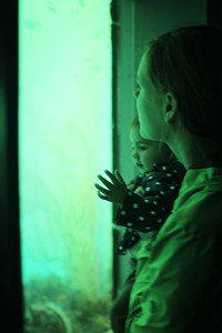 Aunika and Malia watch the fish in the underwater observatory at Milford Sound.