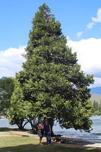 Wonderful trees in Queenstown