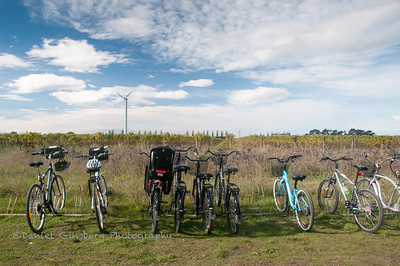 Bicycle wine tasting in Napier.
