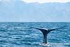 Sperm whale (Tiaki)