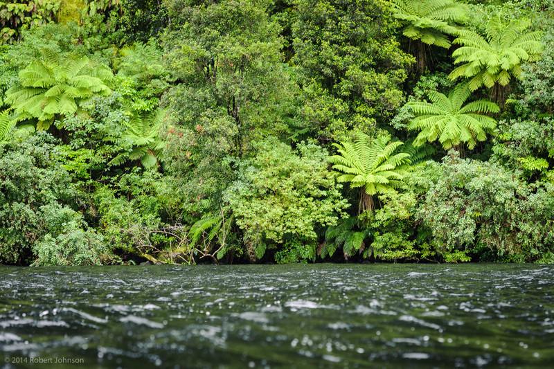 Tree ferns, Doubtful Sound