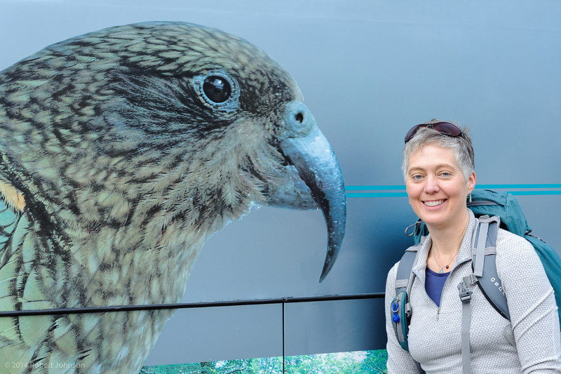 Kea mural on the bus, Queenstown, NZ