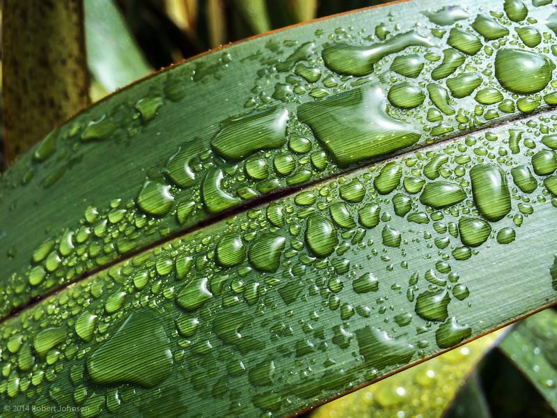 Rain drops keep falling on my flax.