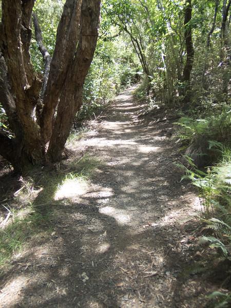 Waitangi-060015