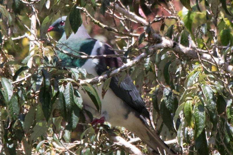 NZ_Treetop-7084