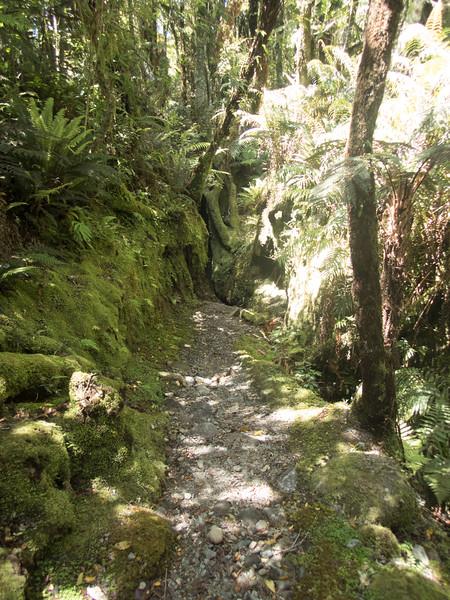 NZ_Treetop-200482