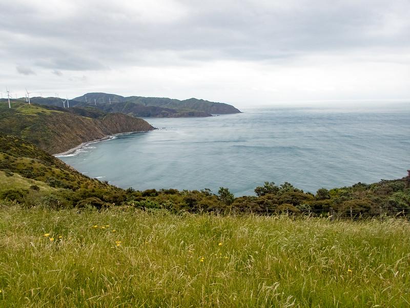 NZ_Makara-110116