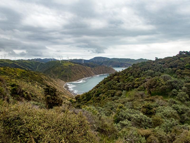 NZ_Makara-110113