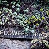 Flowers Track