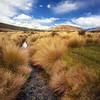 Fields of Rohan