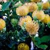 Wild Proteas in Sumner