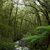 8098-8103 Milford Sound Highway Chasm Creek Trail