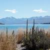 1010825 Wanaka to Christchurch Lake Tekapo